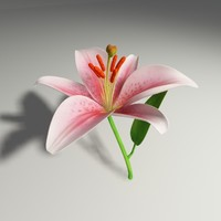 3d model madonna lily flower