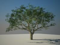 hi rez tree