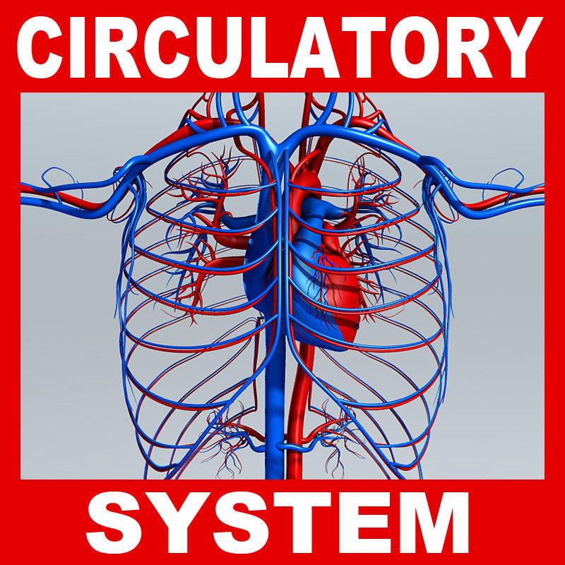 Circulatory_System.jpg