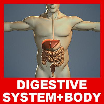 Digestive_Body_Small.jpg