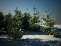 3d pack fir trees