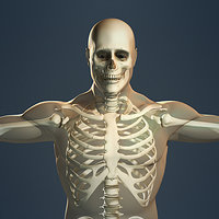 3d human skeleton male body model