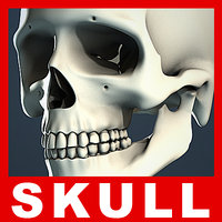 Human Skull (No Textures)