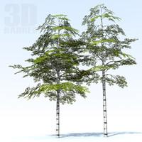 Tree birch 01