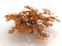 3d maple tree