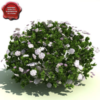 spiraea japonica little princess 3d model