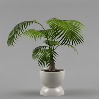 plant with flowerpot_12