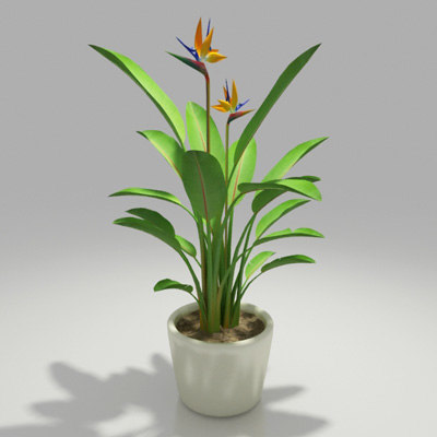 Bird Of Paradise Indoor Plant  Things To Know Before