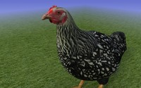 3d max black chicken