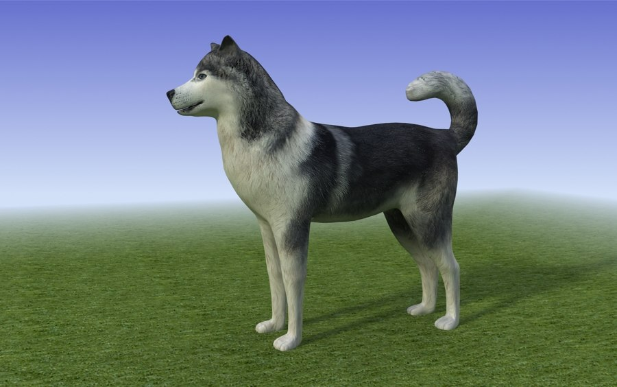 dog_black_white_Husky_3d model_sample05.jpg