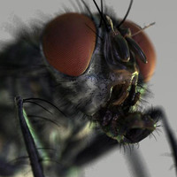 housefly for maya 7 and up