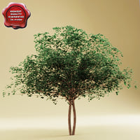 cockspur hawthorn 3d model