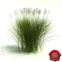 3d model panicum virgatum heavy metal