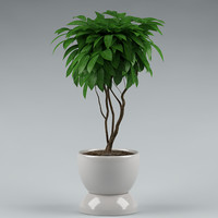 plant with flowerpot_13