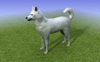 White Husky. Low Poly 3D Model Dog