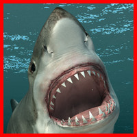 3ds max great white shark