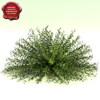 caryopteris x clandonensis dark 3d model