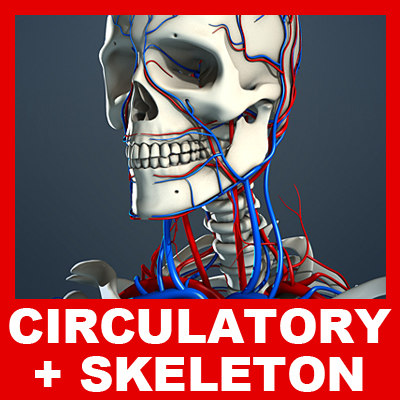 Circulatory_Skeleton_01_Small.jpg
