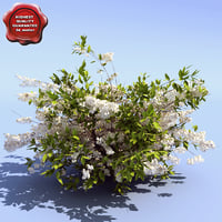 deutzia scabra fuzzy 3d model