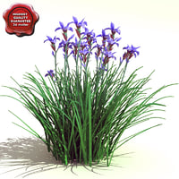 3ds max iris sibirica siberian