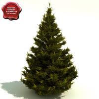 Juniperus chinensis (Hetzii Glauca)