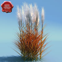 miscanthus sinensis purpurascens 3d model