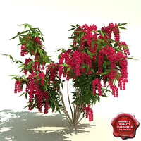 pieris japonica valley valentine 3d model