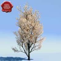 pyrus calleryana aristocrat 3d model