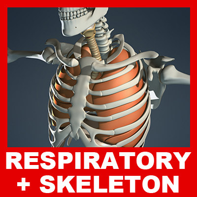 Respiratory_Skeleton_Basic_Small.jpg