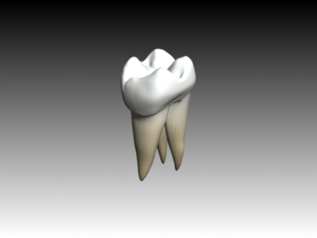 first molar maxilar textured2.jpg