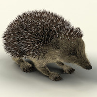 (s) Hedgehog