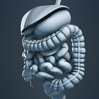 3d anatomy model - Digestive System and Human Skeleton (No Textures)... by plasticboy