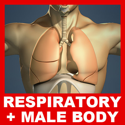 Respiratory_Body_Basic_Small.jpg
