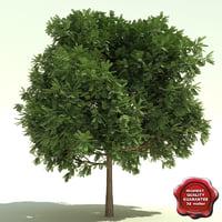 lwo gleditsia triacanthus shademaster