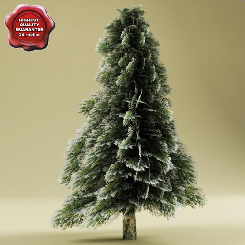 Low_fir_tree_in_snow_0.jpg