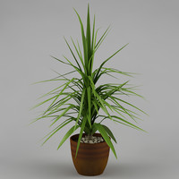 plant with flowerpot_16