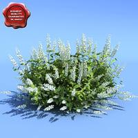 clethra alnifolia hummingbird 3d model