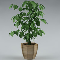 plant with flowerpot_17