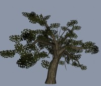 small oak tree obj