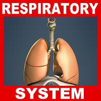 Respiratory System and Diaphragm (No Textures)