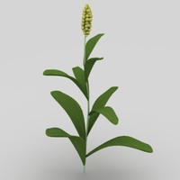 corn vegetable plant 3d model