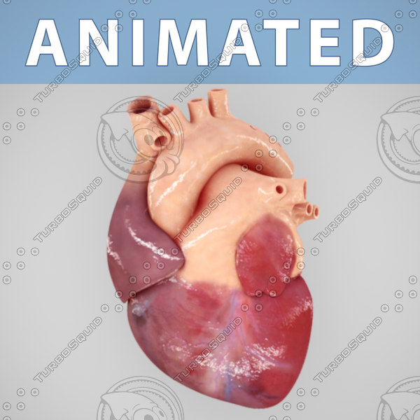 Animated human heart - photo#27