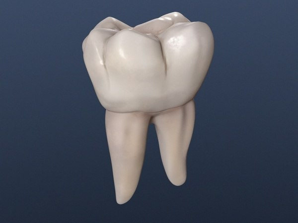 Render_Lower_First_Molar_1.jpg
