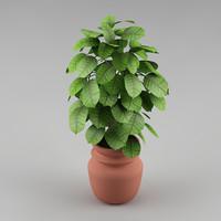 3d plant flowerpot realistic model