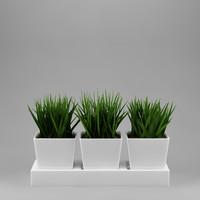plant_0003