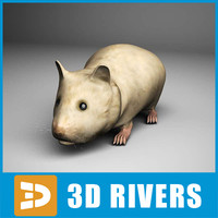 Hamster by 3DRivers