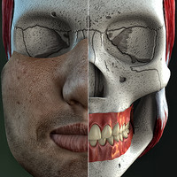 male_dental_skull.max