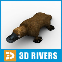platypus animals mammal 3d model