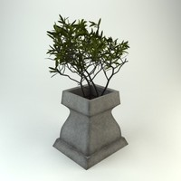 plant potted 3d model