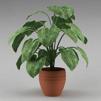 plant_06